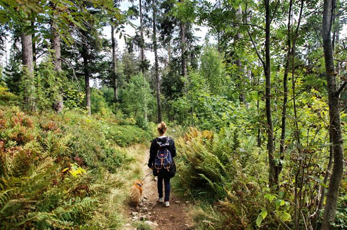 Wanderung-Hochschwarzwald