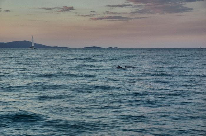 Delfine-Port-Douglas