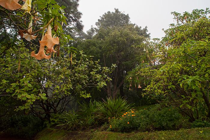 Madeira_Fotos_Palheiro_Gärten