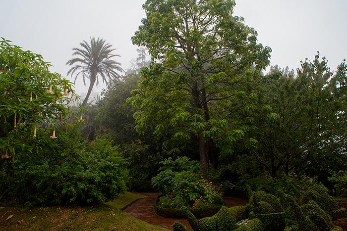 Madeira_Nebel_Palheiro_Gärten
