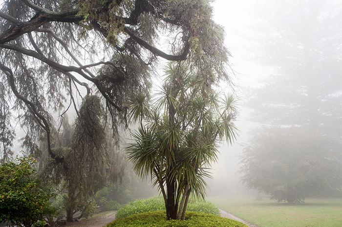 Madeira_Palheiro_Gärten_Nebel