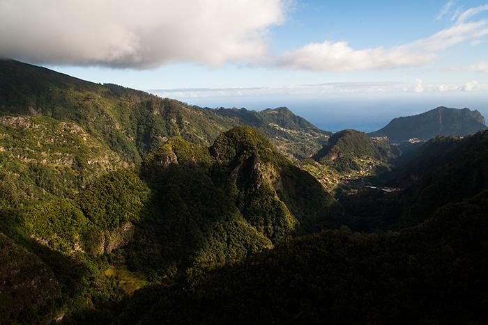 Madeira_Wald_Lorbeer