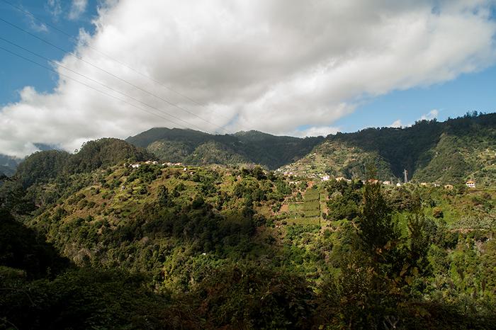 Madeira_Terrassen