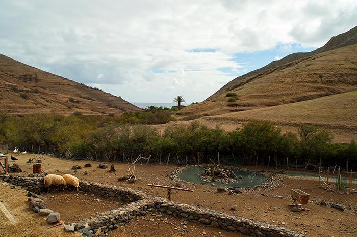 Madeira_Porto_Santo_Hof