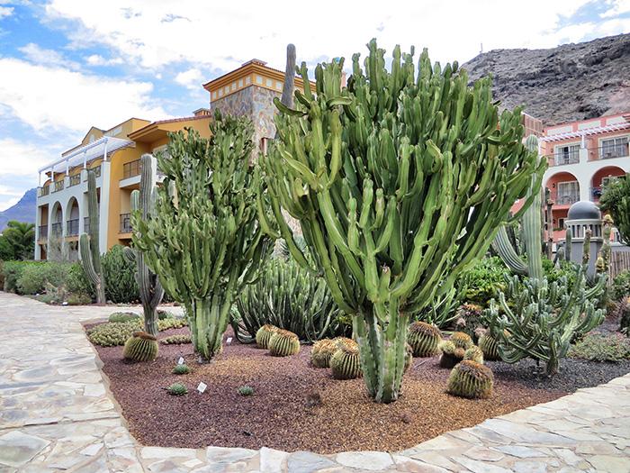 Gran-Canaria_Hotelanlage-und-Kakteen