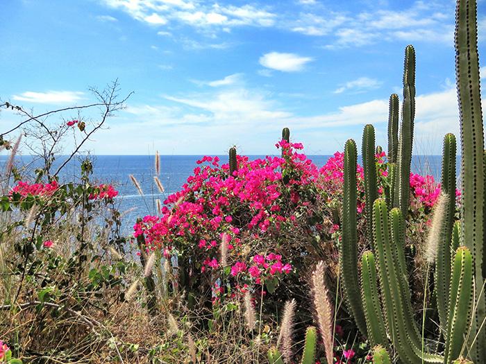 Gran-Canaria_Kakteen-und-Blumen