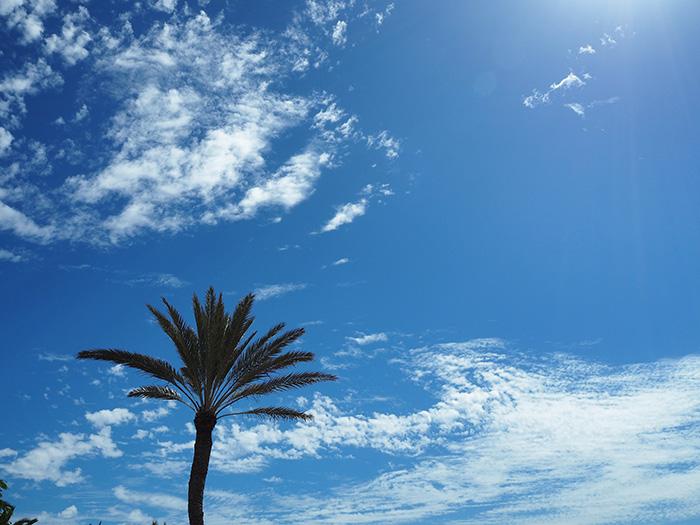 Gran-Canaria_Palme-im-Himmel