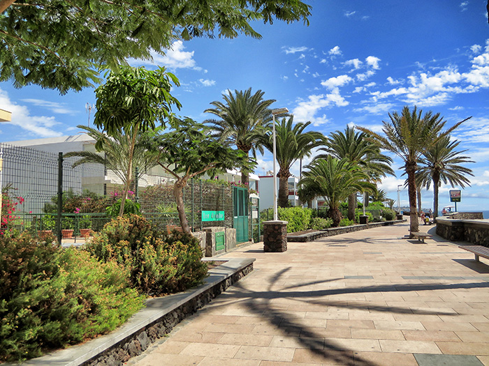 Gran-Canaria_Palmenweg