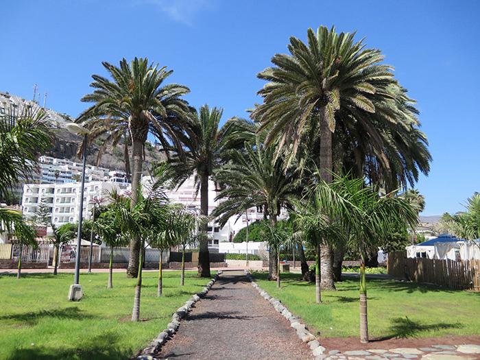 Gran-Canaria_Palmenweg2