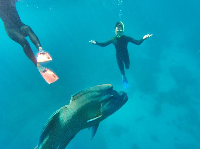 Great-Barrier-Reef-Schnorcheln