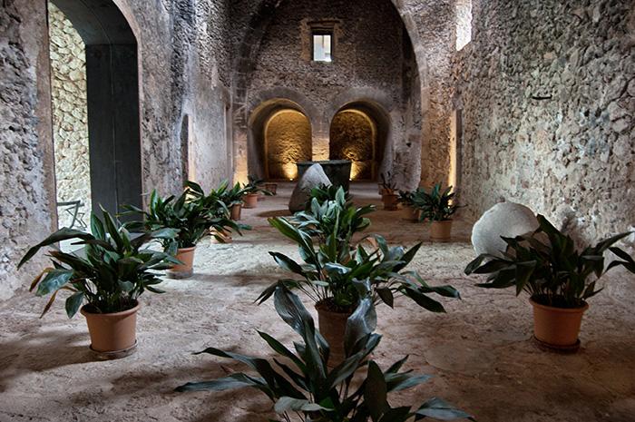 Mallorca_Geheimtipps_Pflanzengang02
