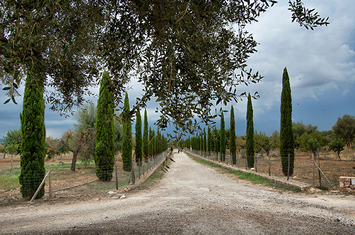 Mallorca_Geheimtipps_Weg-Weingut