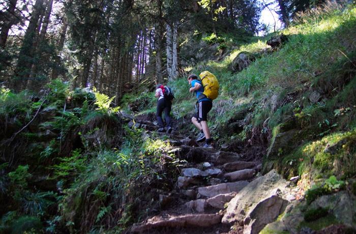 Meraner-Höhenweg-Waldstück