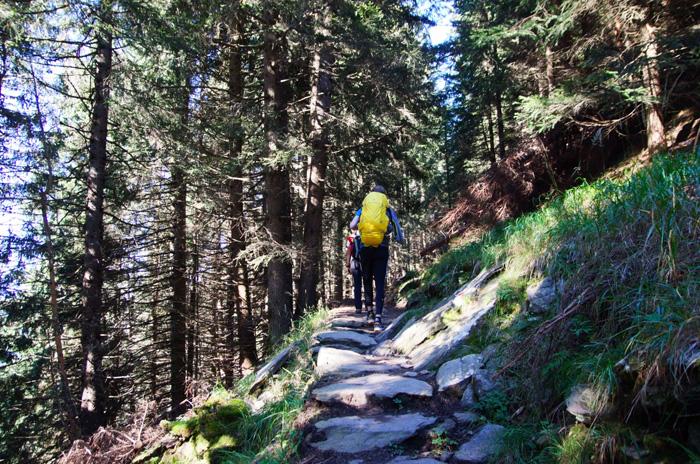 Meraner-Höhenweg-Waldweg