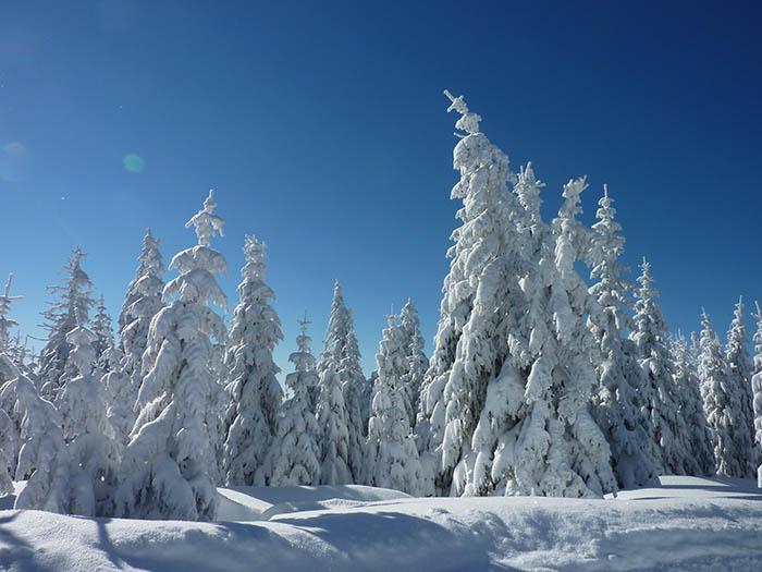 Winterwoche im Schwarzwald