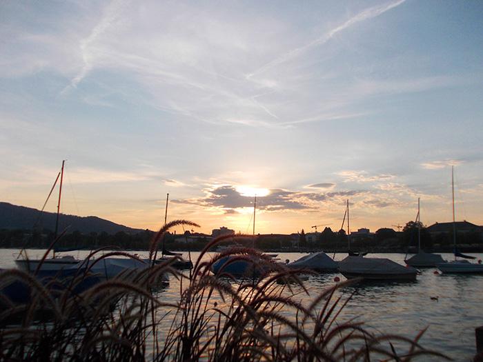 Schweiz-Zürichsee-abends-Gräser