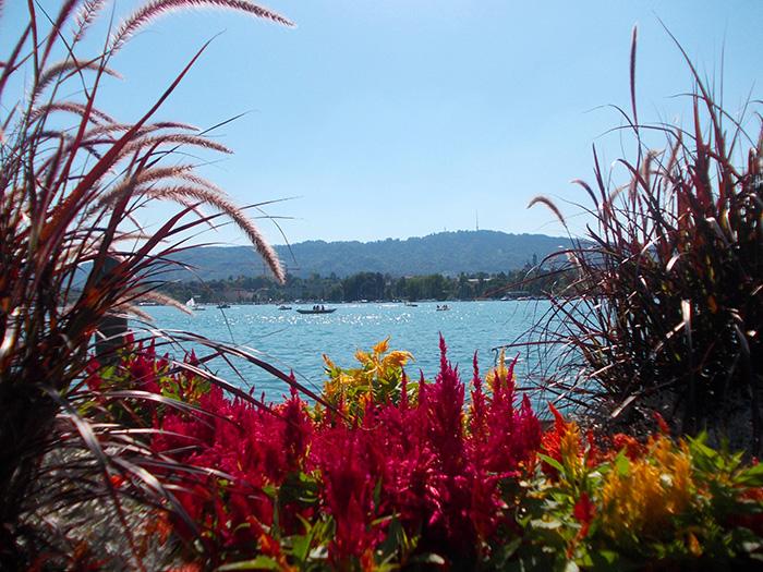 Schweiz-Zürichsee-Blumen