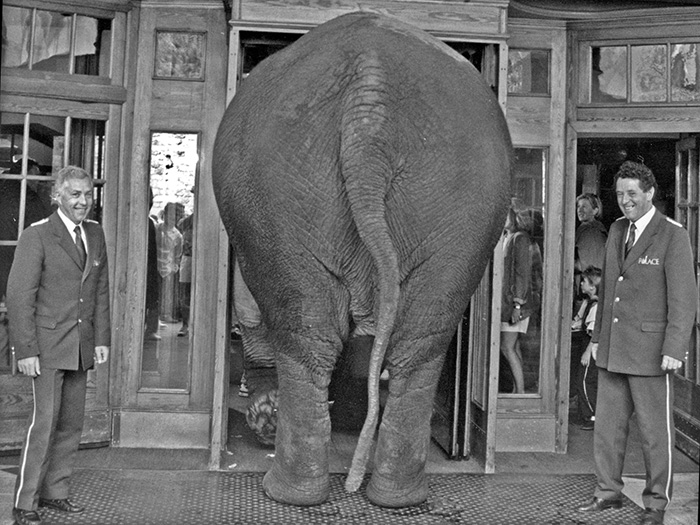 Badrutts-Palace-Elefant