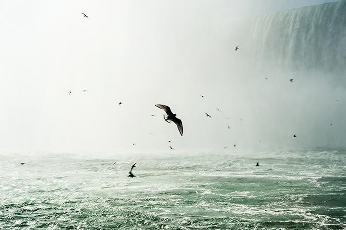 Ontario_Niagara_Fälle_Vögel