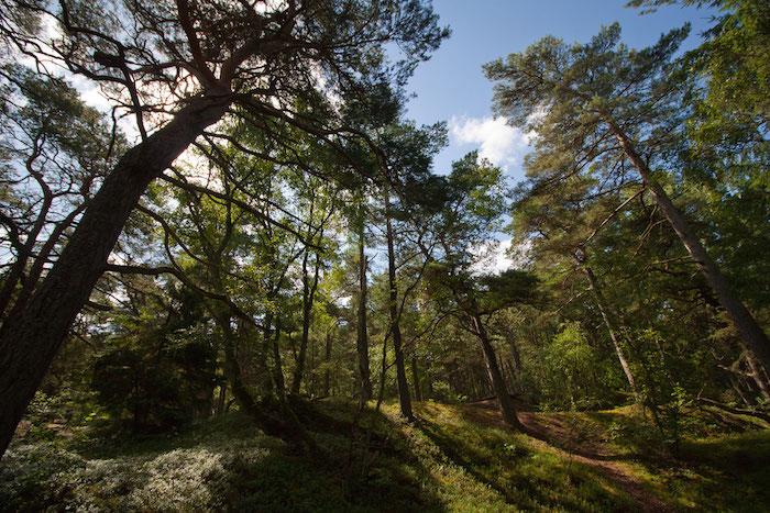Wald Schweden