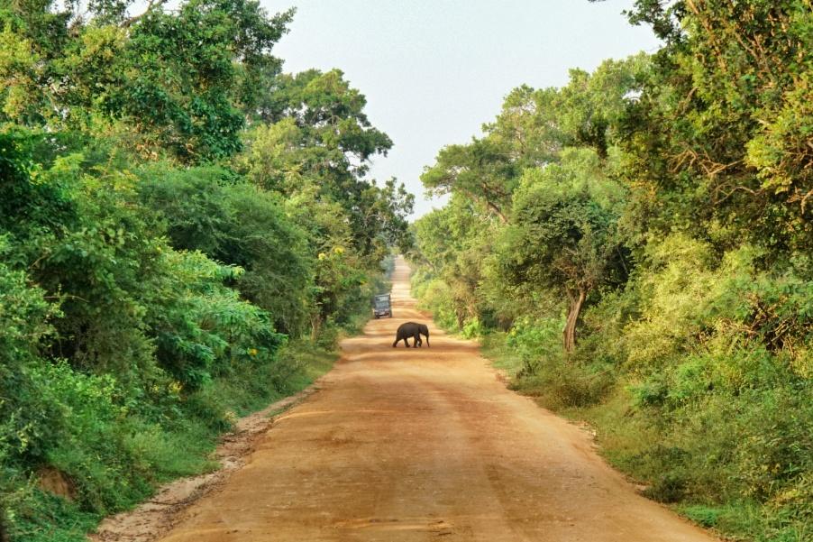 Babyelefant-Sri-Lanka