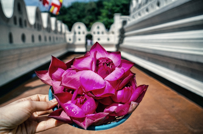Blume-Tempel