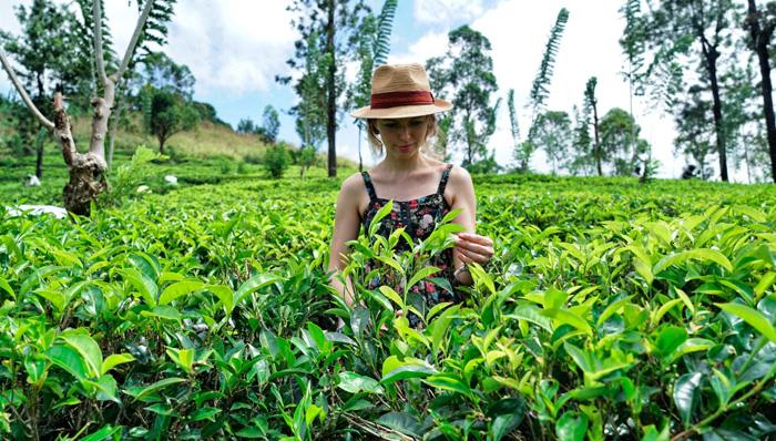 Christine-Neder-Teeplantage