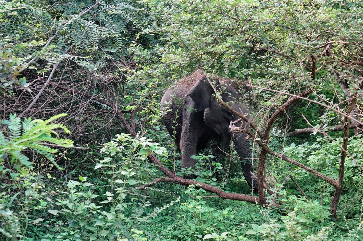 Dschungel-Elefant