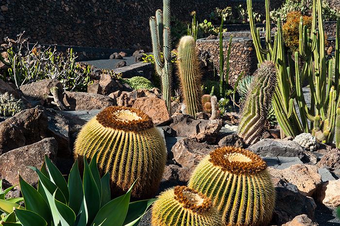 expedia_jardin_de_cactus