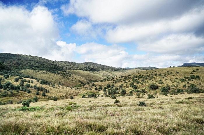 Horton-Plain-Landschaft