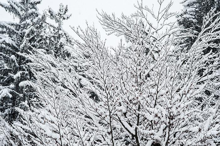Innsbruck_Schnee_Baum