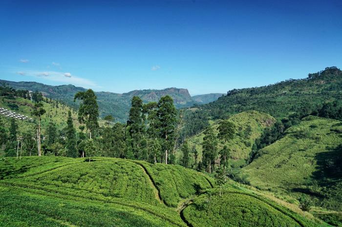 Landschaft-Sri-Lanka