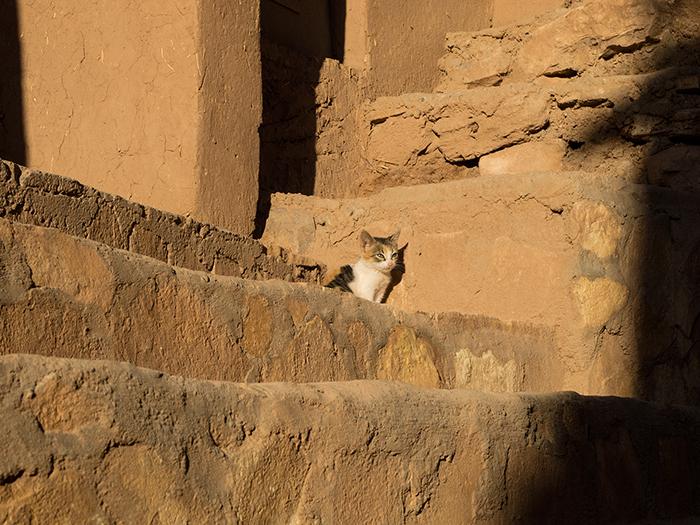marokko_katze_in_der_sonne