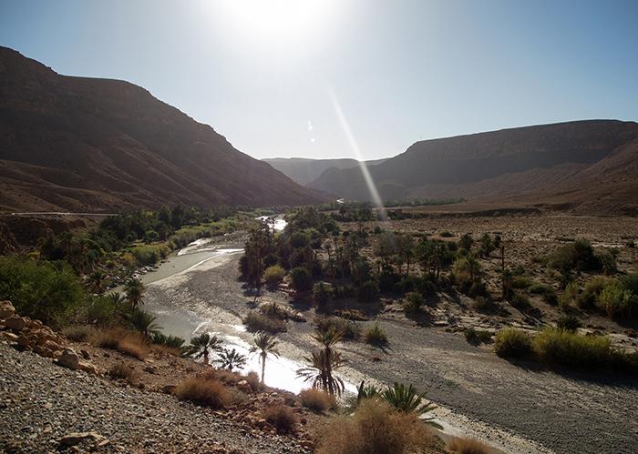 marokko_palmen_oase