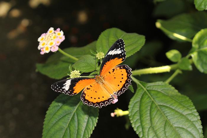Urlaub in Myanmar-garden-Botanic