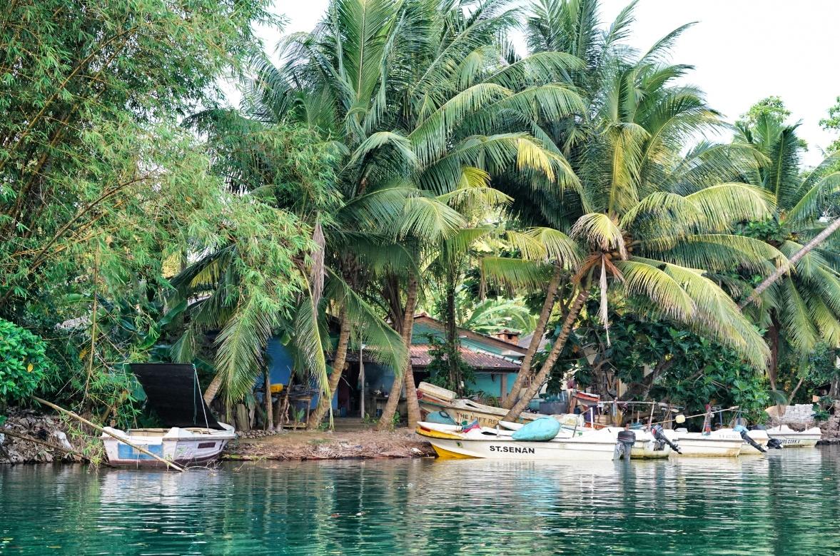 Palmen-Sri-Lanka
