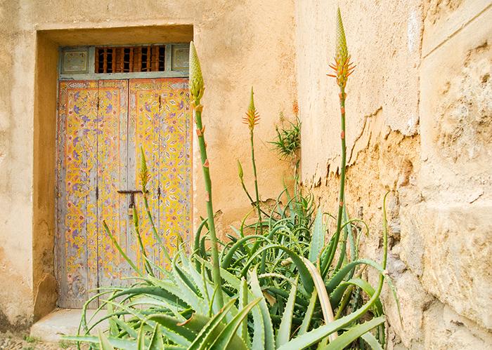 Pflanzen_Marokko
