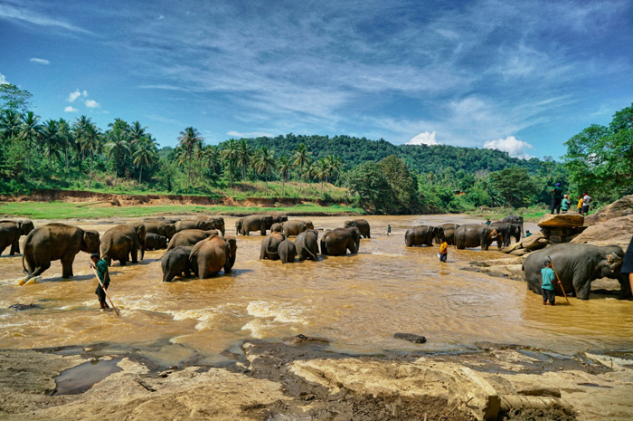 Pinnawala-Elefantenwaisenhaus