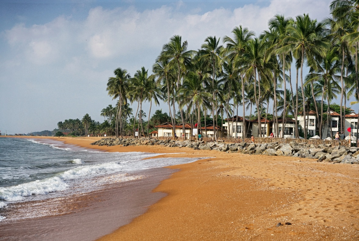 Strand-Palmen-Sri-Lanka