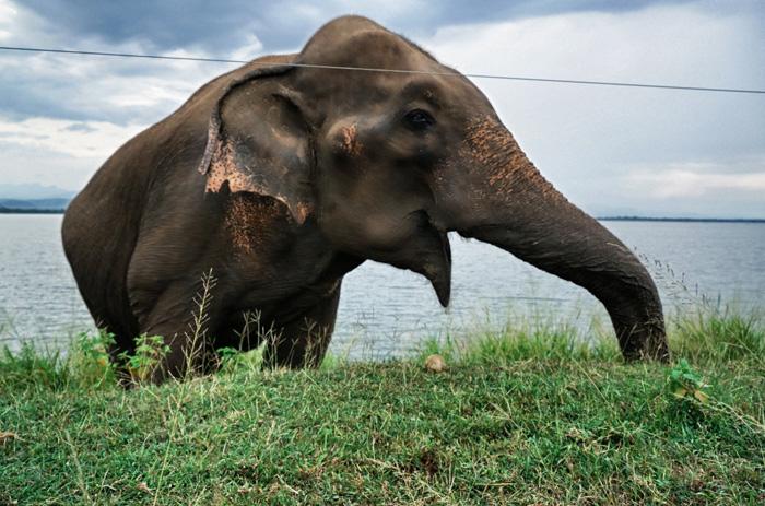 wilder-Elefant