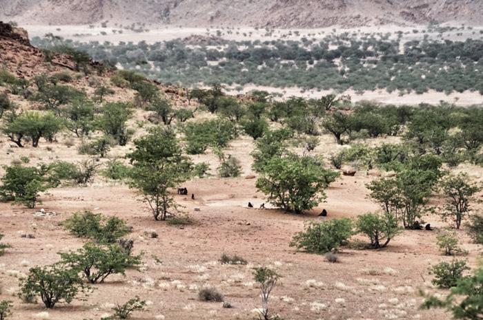 Affen-Camp-Mowani