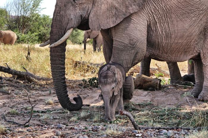 Babyelefant-und-Mutter