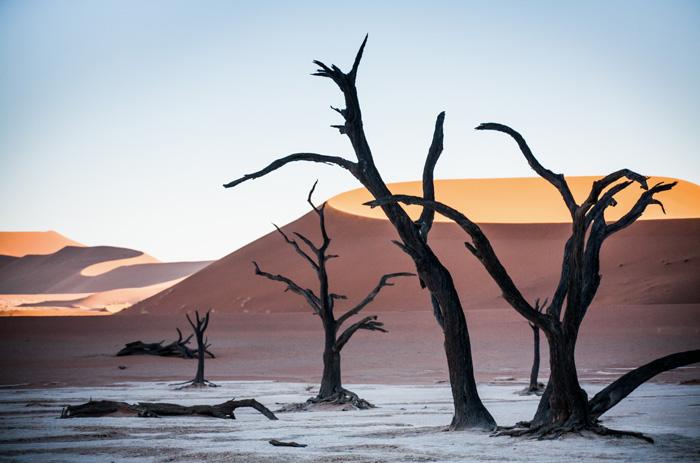 Bäume-Afrika.Namibia Credit: Taleni Africa
