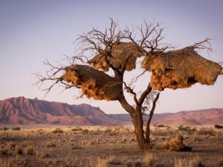 Baum-Namibia