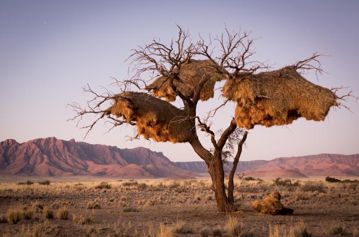 Baum-Namibia-Credit: Taleni Africa