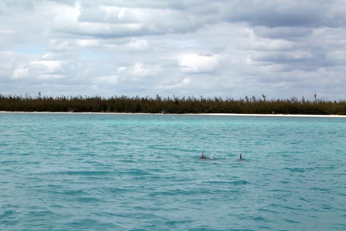 Delfine bahamas