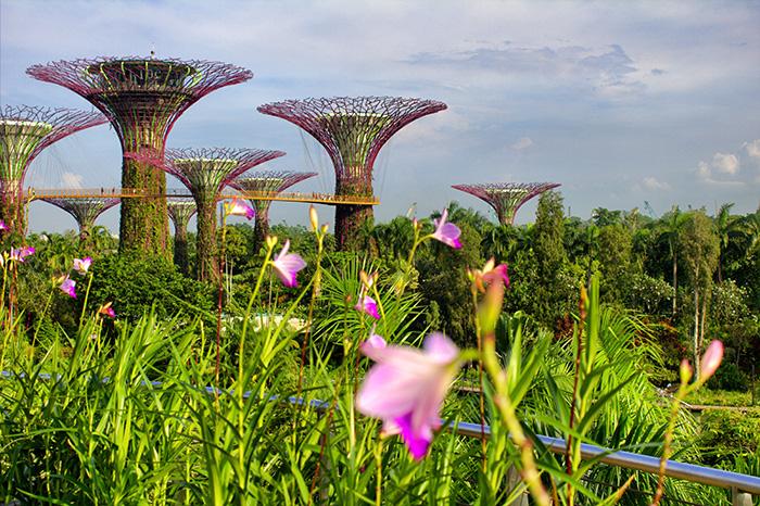 Ein-Tag-in-Singapur-Singapur-Gardens-By-the-Bay-mit-Blumen2