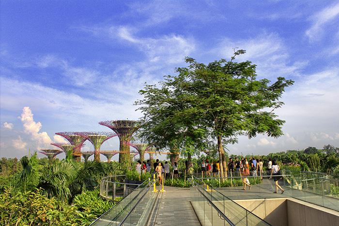 Ein-Tag-in-Singapur-Singapur-Gardens-by-the-bay