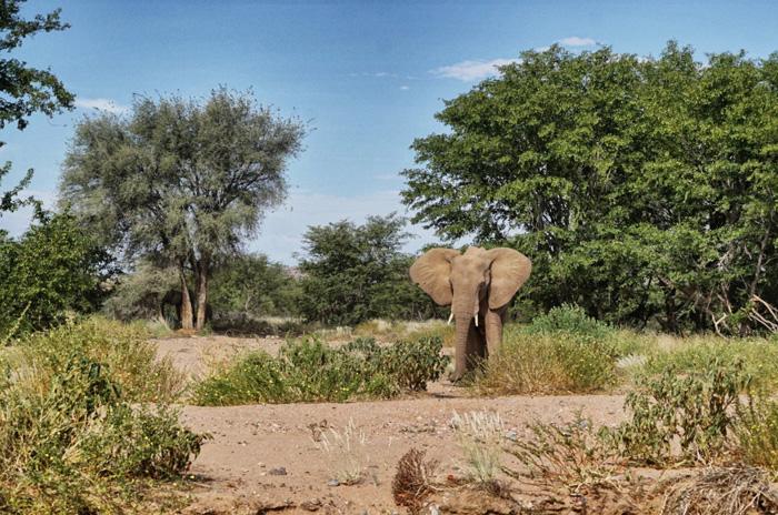 Elefanten-Afrika