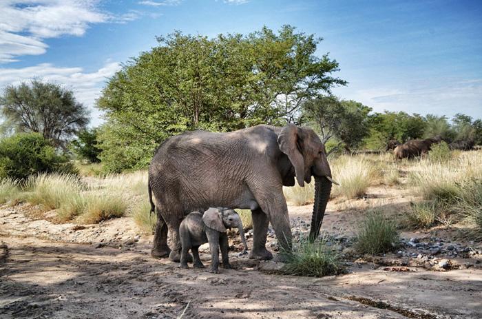 Elefanten-Mutter-und-Kind